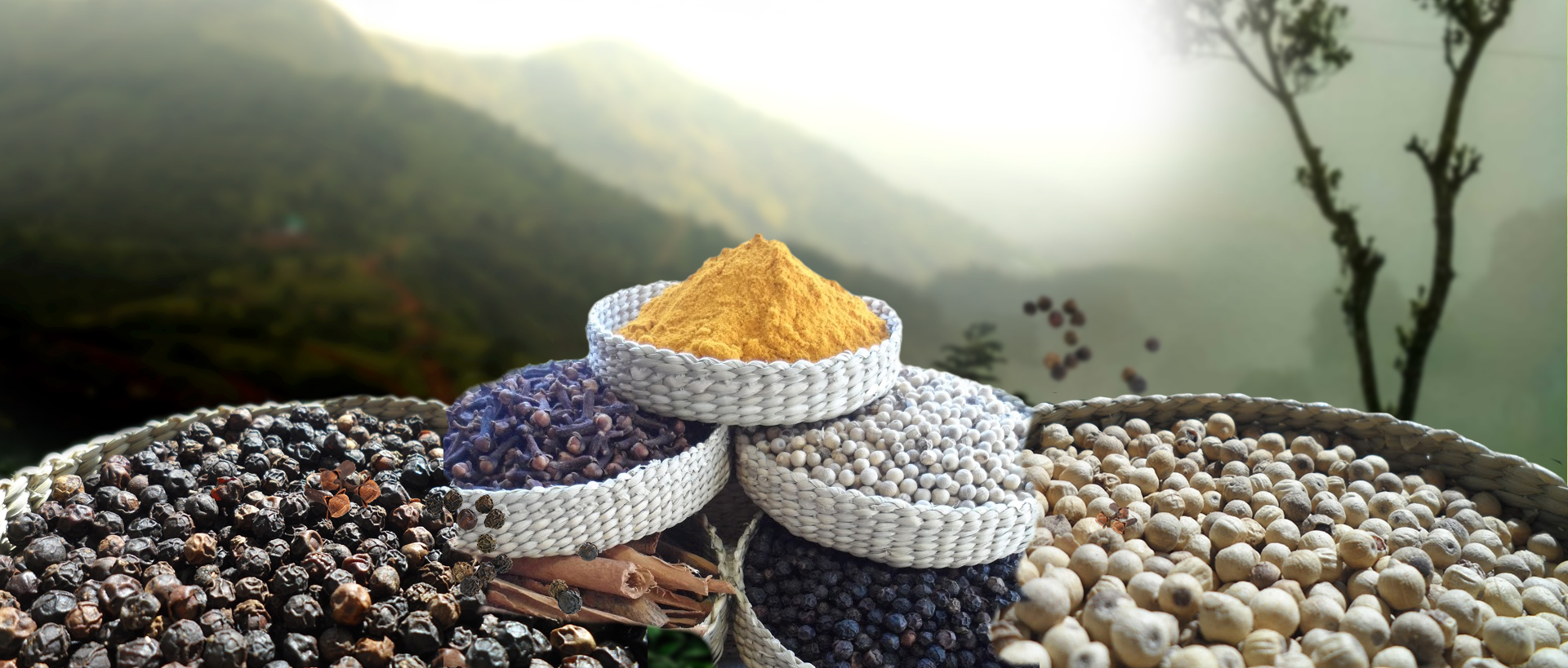 India's foremost organic spice exporter