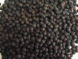 Black-Pepper-TGSEB-300x256