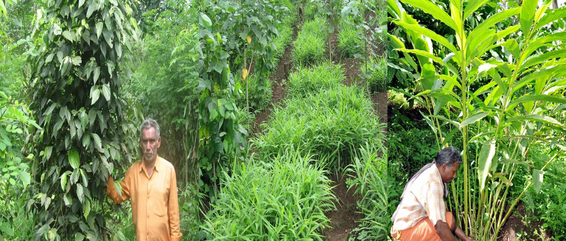 In partnership with nature and small farmers for a better tomorrow